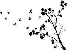 在秋天树附近的鸟飞行 库存图片