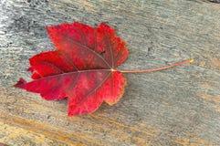 在秋天桌上的红色叶子在外面公园 图库摄影