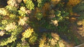 在秋天森林下看法的空中上面有绿色和黄色树的 影视素材