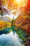 在秋天森林中的五Flower湖,九寨沟自然保护 免版税库存照片