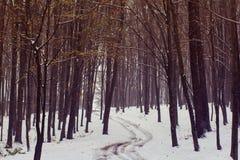 在秋天森林中的小径用第一个s盖 图库摄影