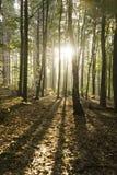 在秋天森林中的日出 免版税图库摄影