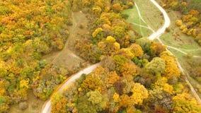 在秋天森林的飞行 股票视频