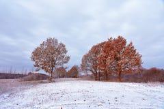 在秋天森林秋天颜色的第一雪在树 autum 免版税库存照片
