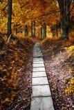 在秋天森林秋季场面的道路在 免版税库存图片