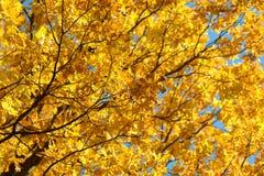 在秋天森林红色,橙色,黄色,绿色和棕色秋叶的美丽的五颜六色的叶子 橡木叶子 库存图片