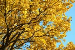 在秋天森林红色,橙色,黄色,绿色和棕色秋叶的美丽的五颜六色的叶子 橡木叶子 免版税库存照片