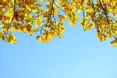 在秋天森林红色,橙色,黄色,绿色和棕色秋叶的美丽的五颜六色的叶子 橡木叶子 库存照片