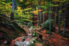 在秋天森林美丽如画的风景的道路 免版税库存照片