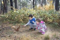 在秋天森林里孩子哺养了蛋白质 免版税库存照片