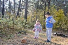 在秋天森林里孩子哺养了蛋白质 免版税库存图片