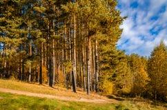 在秋天森林里 库存照片