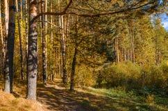 在秋天森林里 免版税库存图片