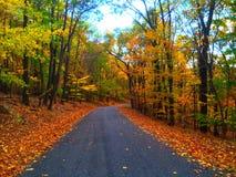在秋天森林驾驶 库存图片