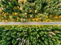 在秋天森林鸟瞰图的路 免版税库存照片