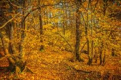 在秋天森林instagram窗框 图库摄影