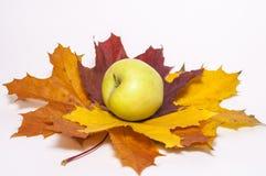 在秋天槭树叶子的红色苹果 免版税库存图片