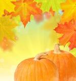 在秋天槭树的两个南瓜离开背景 免版税库存照片