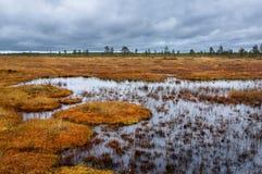 在秋天沼泽的多云天 免版税库存照片