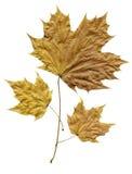 在秋天流洒的叶子。 免版税库存图片