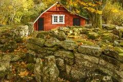 在秋天流洒的庭院 库存照片