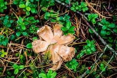 在秋天特写镜头的蘑菇 免版税图库摄影