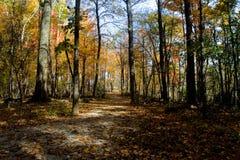 在秋天的一串足迹在中央俄亥俄 免版税图库摄影