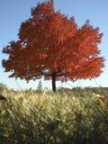 在秋天的一棵树 免版税图库摄影