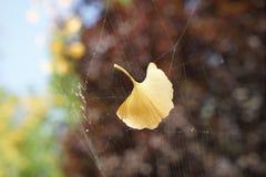 在秋天的一片叶子 库存图片