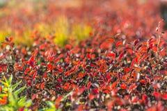 在秋天的五颜六色的叶子 免版税库存照片
