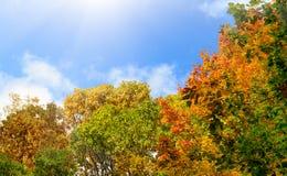 在秋天的五颜六色的树在蓝天背景 库存图片