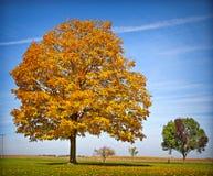 在秋天的五颜六色的树 免版税库存图片