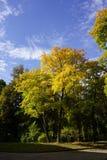 在秋天的五颜六色的树 库存图片