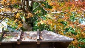 在秋天的传统日本屋顶 免版税库存照片