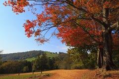 在秋天的供徒步旅行的小道 免版税库存照片