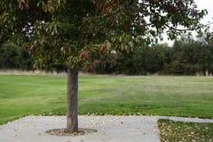 在秋天的公园树 库存图片