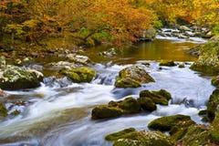 在秋天的动作缓慢小河 图库摄影