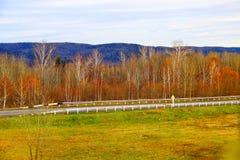 在秋天的北方针叶林木头 免版税库存图片