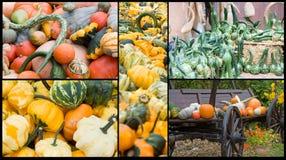 在秋天的南瓜收集 免版税库存照片
