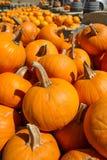 在秋天的南瓜 免版税库存照片