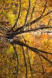 在秋天的发烟性山小河 库存图片
