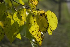 在秋天的叶子 免版税库存照片