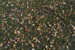在秋天的叶子 库存照片