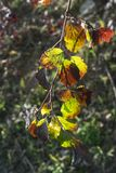 在秋天的叶子 库存图片