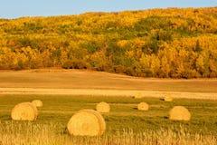 在秋天的干草捆 库存图片