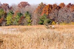 在秋天的慢跑者 库存图片