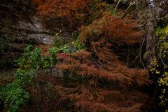 在秋天的抽象室外场面 免版税图库摄影