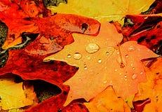 在秋天的早晨 免版税图库摄影