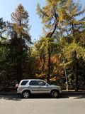 在秋天的本田汽车 免版税图库摄影