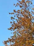 在秋天的树 库存图片